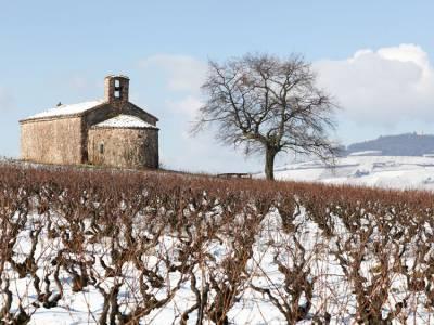 Et en hiver, il se passe quoi dans nos vignes ?