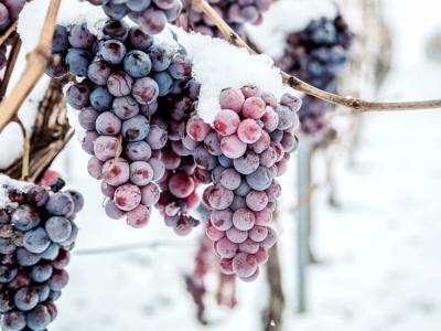 Le vin de glace, un vin rare et précieux