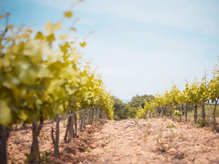 Les vignes sont réparties sur 2 appellations : les Costières de Nîmes et les Côtes du Rhône.