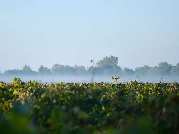 Mas de Valériole, vignoble biologique en Camargue